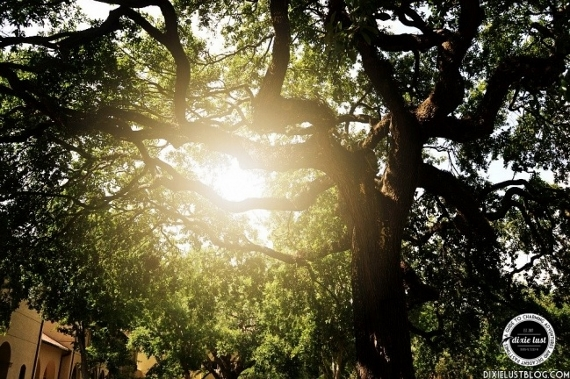 dixie lust sun through the oaks (570x379)